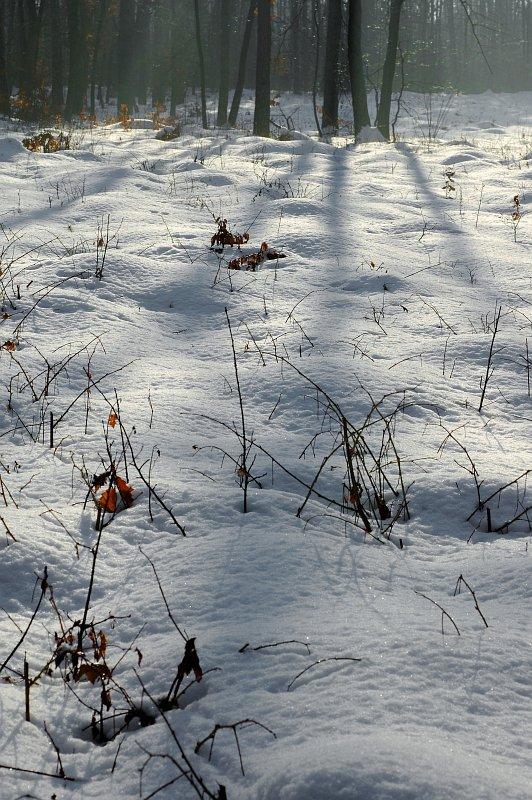 0001-ajotte-com-free-stock-images-winter-landscape