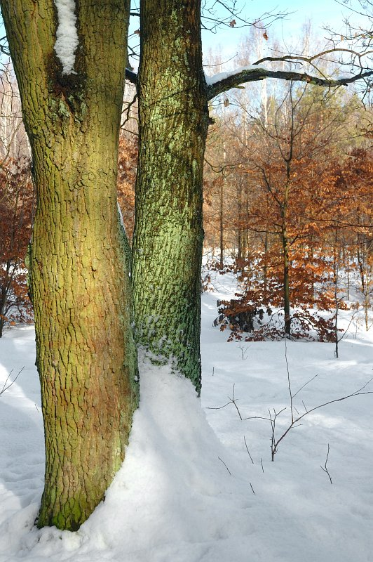 0004-ajotte-com-free-stock-images-winter-landscape
